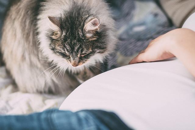 kobieta w ciąży i kot