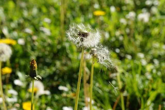 pylące rośliny na łące
