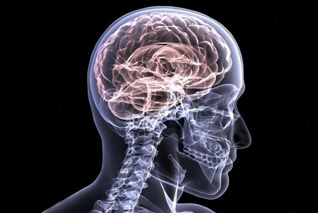 Przekrój czaszki